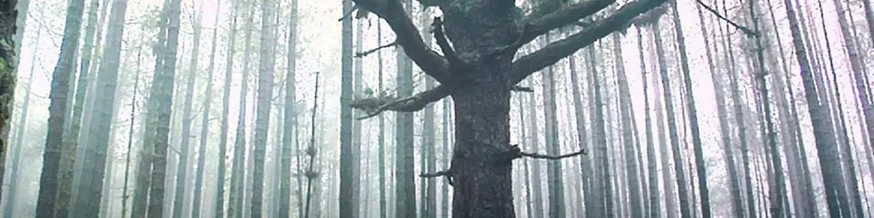 cultura bosque memoria bg seccion