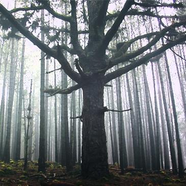 bosque memoria square img