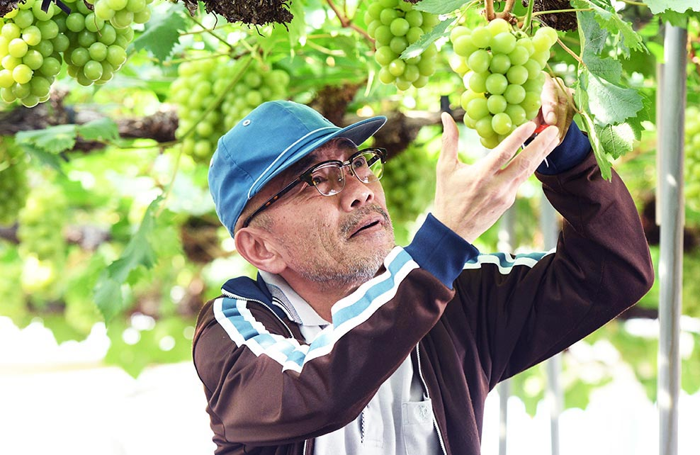Japoin THE GRAPES OF JOY 1