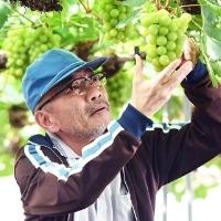 Grapesofjoy