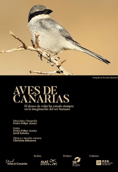 cartel aves de canarias