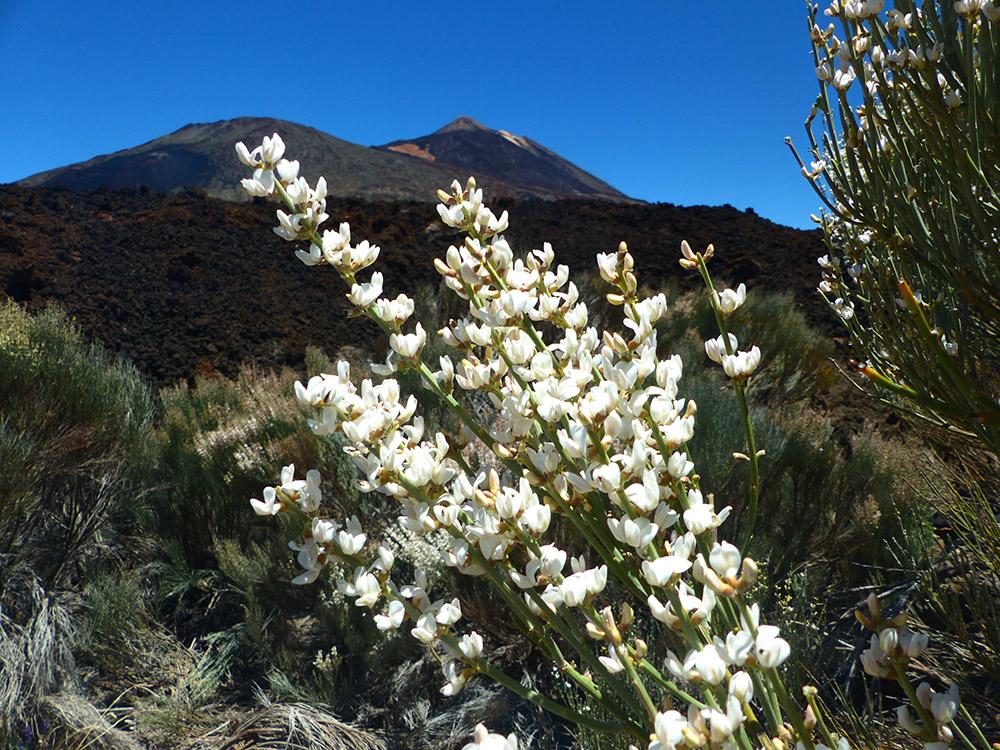 ruta alta montana