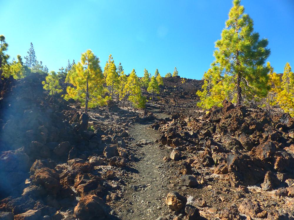 ruta pinar